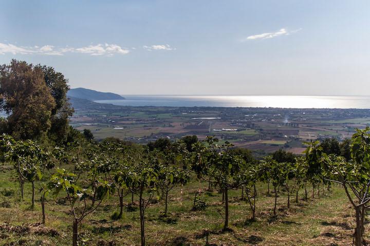 Azienda agricola Il Fico: gli alberi