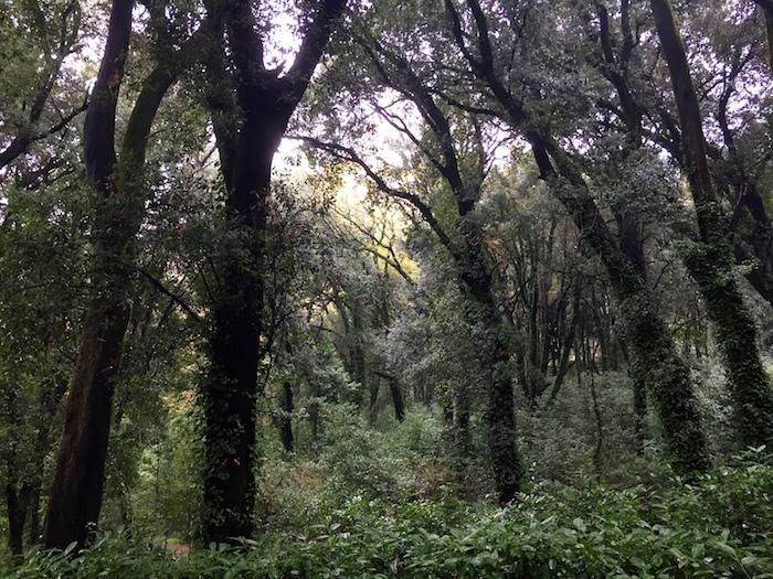 Il viale principale costeggia un bosco fatato